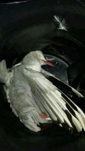 Kondisi burungnya,mengenaskan brosist :((